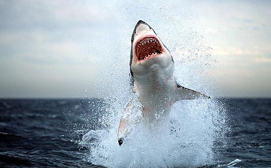 """""""Enigma...lo spazio dello squalo!"""" Squalo"""